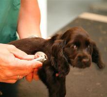 Dierenartsenpraktijk Eric Hoet - Turnhout - Honden