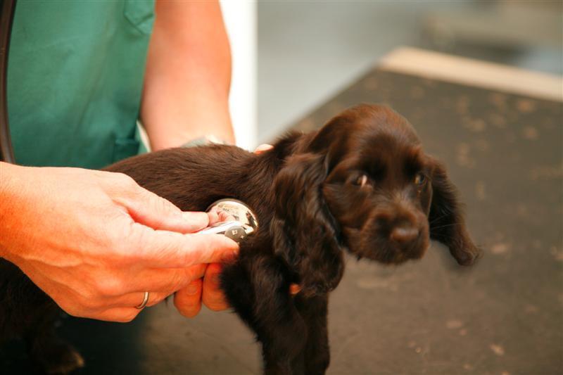 Dierenartsenpraktijk Eric Hoet - Honden